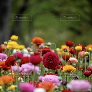 色鮮やかな花が沢山咲いてるの写真・画像素材[3865283]