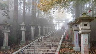 霧が立ち込める参道から鳥居を望むの写真・画像素材[3875122]