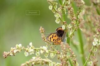 可愛い草花にオレンジの綺麗な蝶が止まってるの写真・画像素材[3875666]