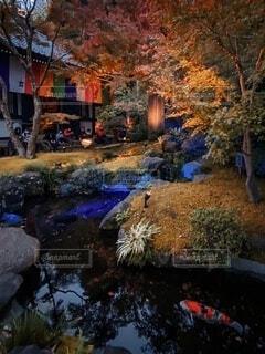 ライトアップされた庭の風景の写真・画像素材[3917610]