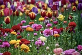 色とりどりの沢山の花が咲いているの写真・画像素材[3941844]