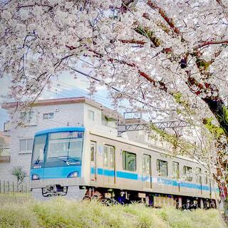 桜と電車の写真・画像素材[4255184]