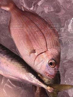 鯛の写真・画像素材[3859766]