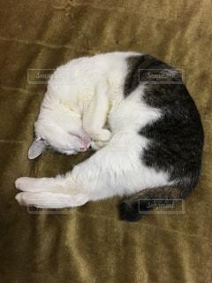 猫の写真・画像素材[162258]