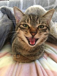 近くに毛布の上に横になっている猫のアップ - No.930571