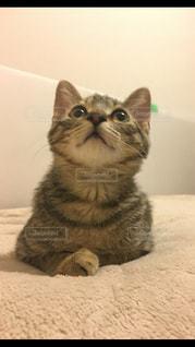 ベッドの上に座っている猫 - No.979848