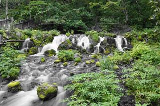 森の中の滝の写真・画像素材[1158535]