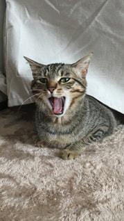 ベッドの上で横になっている猫の写真・画像素材[1212573]