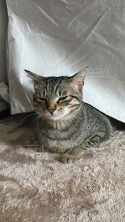 ベッドの上で横になっている猫の写真・画像素材[1212580]