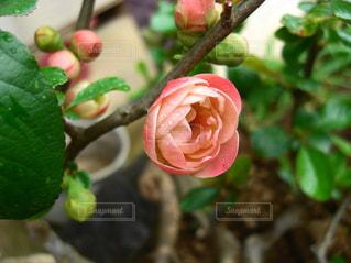 近くの花のアップの写真・画像素材[1379569]