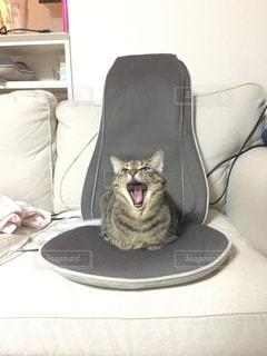 ソファに座って猫の写真・画像素材[1633456]