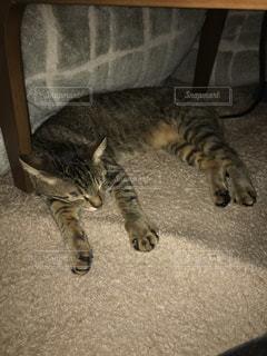 敷物の上に横たわる猫の写真・画像素材[1743211]