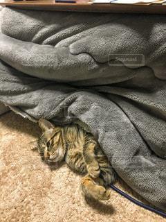 毛布の上に横になっている人の写真・画像素材[1746825]