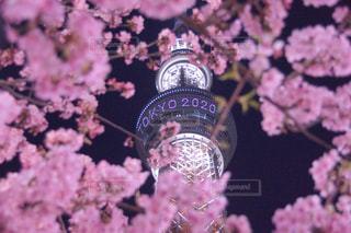 花,春,桜,夜,夜景,東京,ピンク,スカイツリー,TOKYO,夜桜,景色,サクラ,東京スカイツリー,イルミネーション,ライトアップ,日本,桃色,Sakura,さくら,tokyo2020