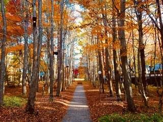秋の小径の写真・画像素材[3862036]
