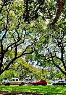 ハワイの風景の写真・画像素材[4126697]