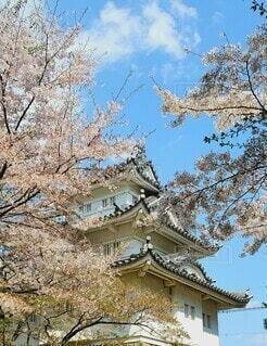 お城と桜の花の写真・画像素材[4274377]