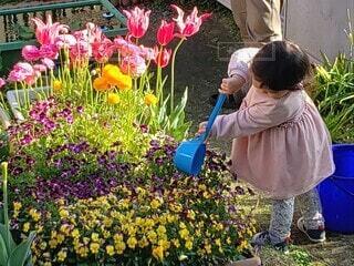 花壇の花に水をやる幼女の写真・画像素材[4350865]