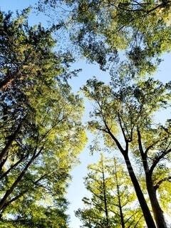 高い木を見上げるの写真・画像素材[3869358]