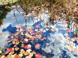 池に映る雲と紅葉の写真・画像素材[3884960]