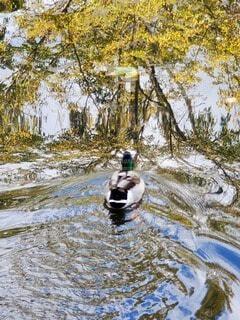 川の隣に立っている人の写真・画像素材[3915492]
