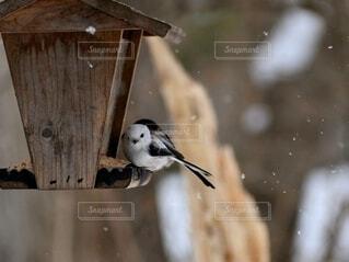 雪の日のシマエナガの写真・画像素材[4143063]