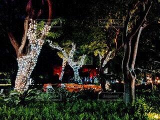 夜の公園もイルミネーションの写真・画像素材[3920258]