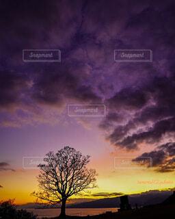 風景,空,夕日,屋外,太陽,朝日,カラフル,雲,夕暮れ,樹木,夕陽,日の出,朝陽,夕景,サンセット,マジックアワー,グラデーション,シンボルツリー,グラデーションカラー,オレンジの世界,広角の世界,パープルの世界