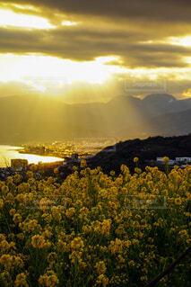 自然,風景,海,花,夕日,朝日,菜の花,山,景色,正月,お正月,夕陽,朝陽,夕景,サンセット,天使の梯子,新年,なのはな