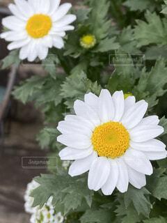春ウララの写真・画像素材[4260705]