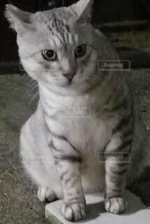 何かを見つけた猫の写真・画像素材[3879505]