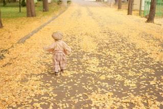 銀杏絨毯の写真・画像素材[3904161]