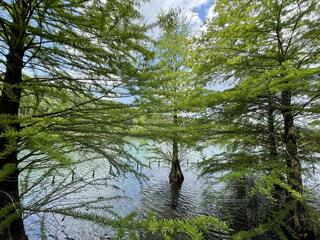 自然,空,鳥,屋外,湖,水面,池,樹木,草木