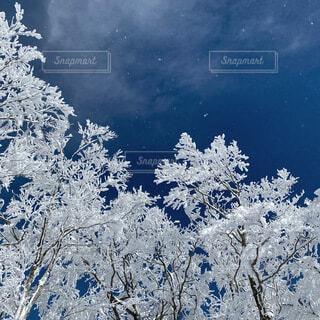 自然,冬,絶景,雪,屋外,雪景色,景色,霜,運動,ウィンタースポーツ,スノー
