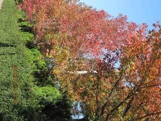 森の大きな木の写真・画像素材[3920694]