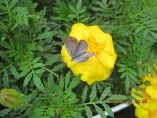 花に飛んで来た瞬間の写真・画像素材[3922884]