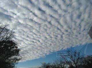 雲の群れと青空の写真・画像素材[3972183]