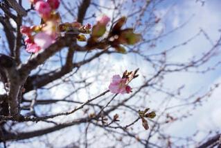 空,花,春,屋外,樹木,草木,ブルーム,ブロッサム