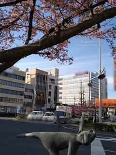 空,春,桜,ビル,屋外,車,樹木,オブジェ,通り
