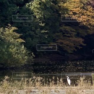 木漏れ日の中何を思うの写真・画像素材[3896405]