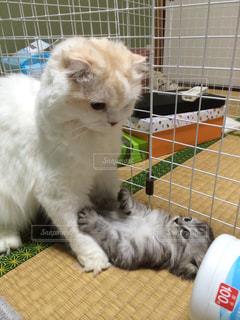猫,ツーショット