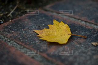 レンガの上に落ちたひとひらの葉の写真・画像素材[3889218]