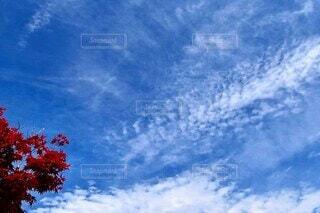 青い空に映える真っ赤なもみじの写真・画像素材[3892691]