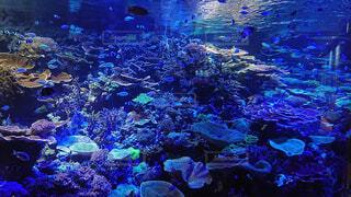 水槽の中に広がる珊瑚礁と魚たちの写真・画像素材[3895294]