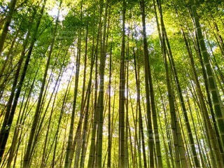 竹林の写真・画像素材[3888952]
