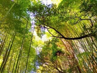 鮮やかに彩る竹林の写真・画像素材[3888955]