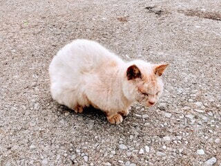 座っている猫ちゃんの写真・画像素材[3903824]