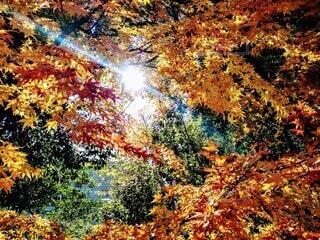 楓の写真・画像素材[3990863]