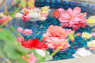 水面に浮かぶカラフルな花の写真・画像素材[3979187]