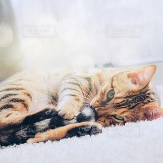 日向ぼっこをしている猫の写真・画像素材[3893845]